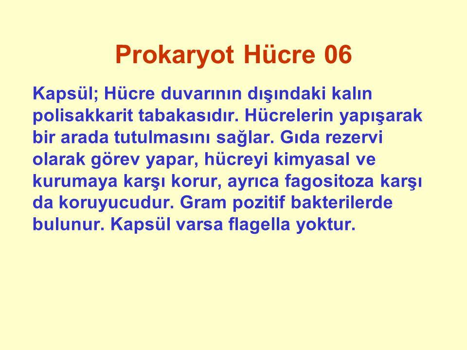 Prokaryot Hücre 06