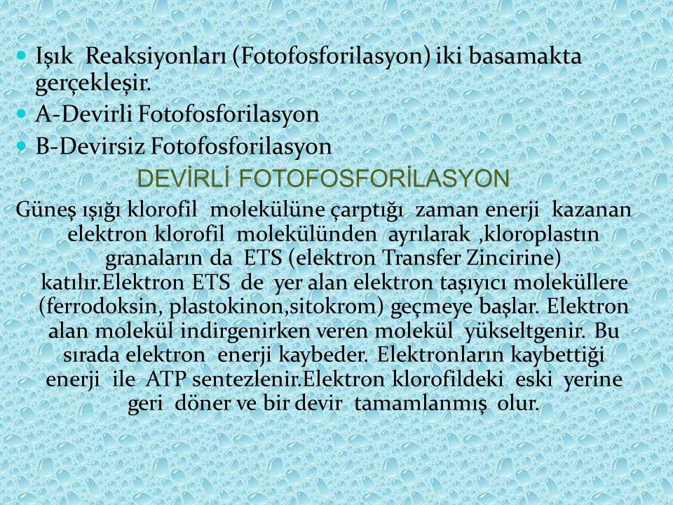 DEVİRLİ FOTOFOSFORİLASYON