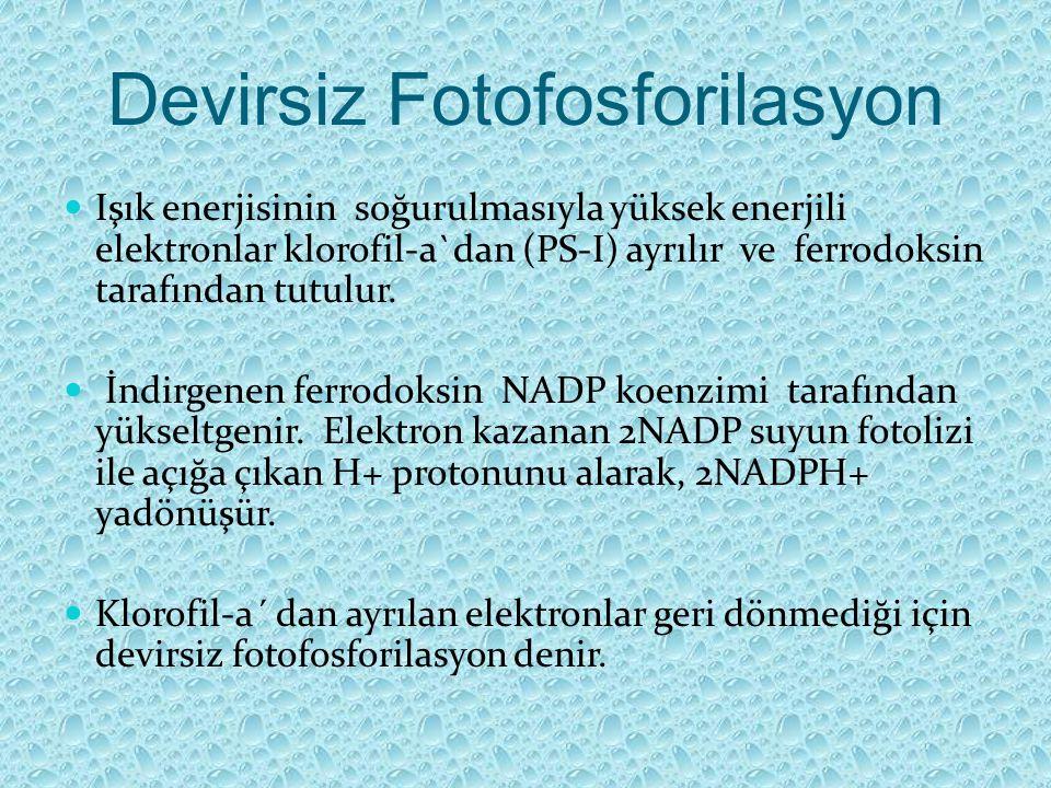 Devirsiz Fotofosforilasyon