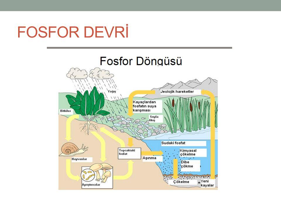 FOSFOR DEVRİ