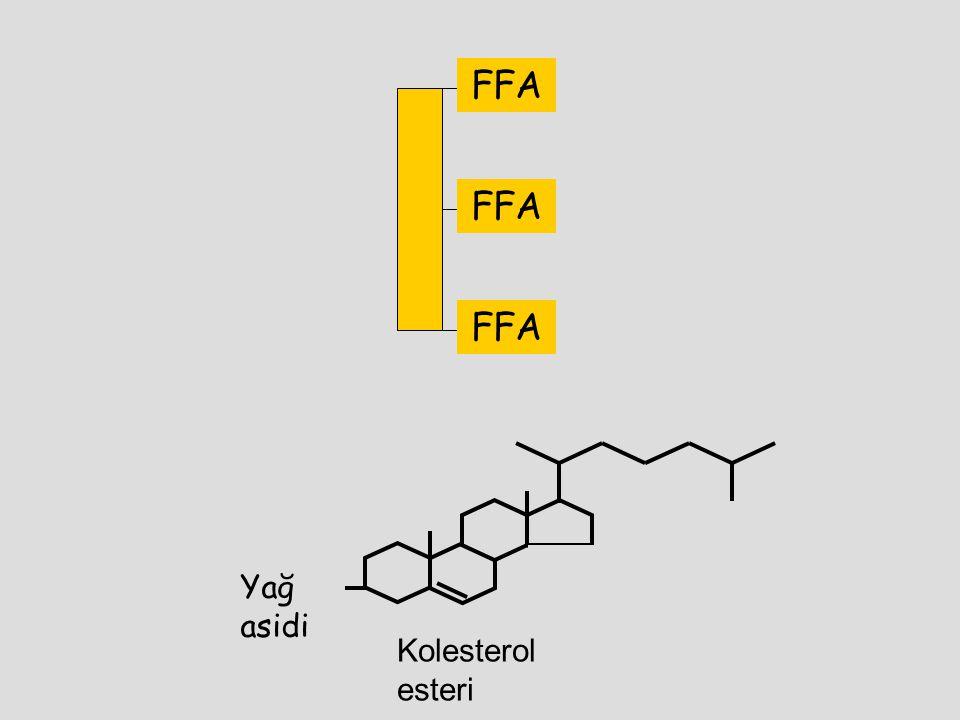 FFA FFA FFA Yağ asidi Kolesterol esteri