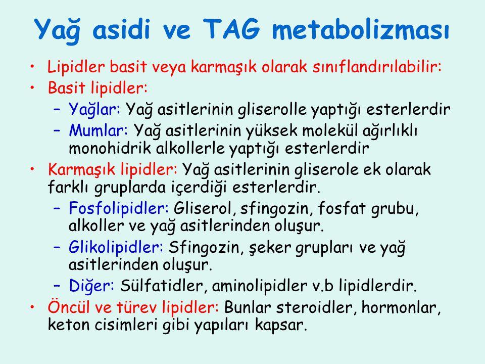 Yağ asidi ve TAG metabolizması