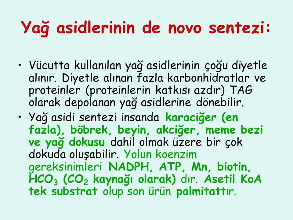 Yağ asidlerinin de novo sentezi: