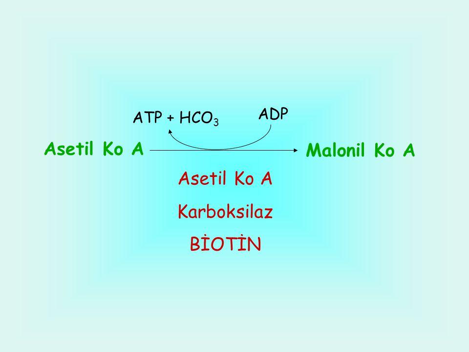 ADP ATP + HCO3 Asetil Ko A Malonil Ko A Asetil Ko A Karboksilaz BİOTİN