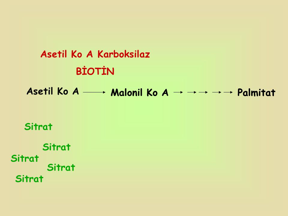 Asetil Ko A Karboksilaz