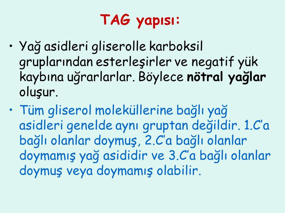 TAG yapısı: Yağ asidleri gliserolle karboksil gruplarından esterleşirler ve negatif yük kaybına uğrarlarlar. Böylece nötral yağlar oluşur.