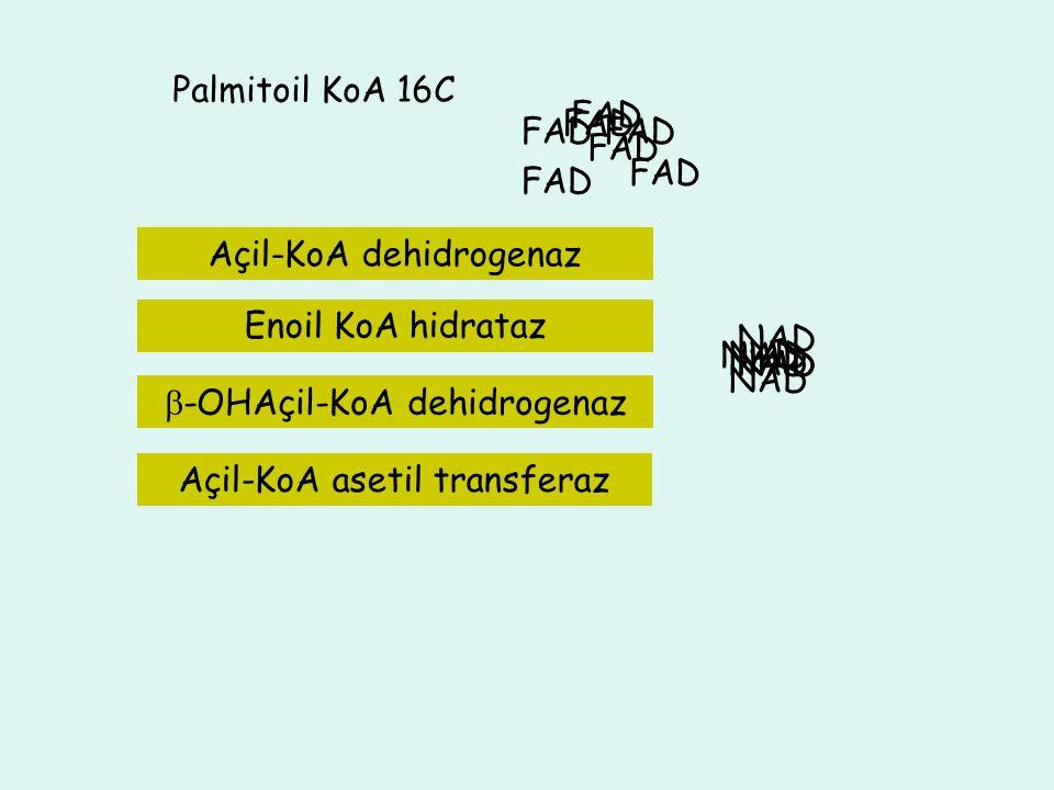 4C Asetil KoA 10C 12C 14 C 6C 8C Palmitoil KoA 16C FAD FAD FAD FAD FAD