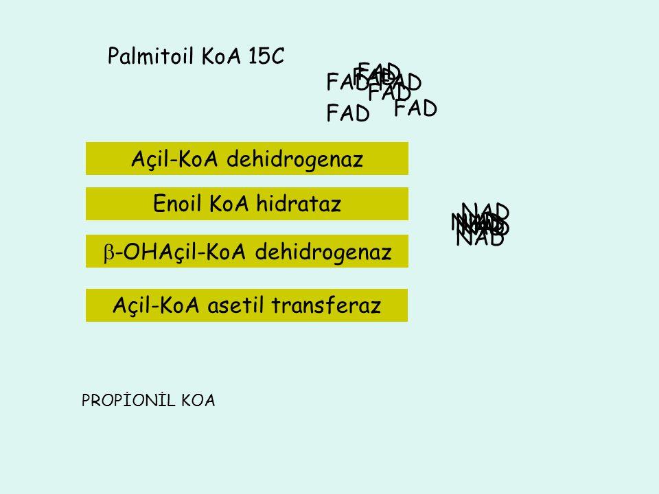 Asetil KoA 9C 13 C 3C 11C 5C 7C Palmitoil KoA 15C FAD FAD FAD FAD FAD