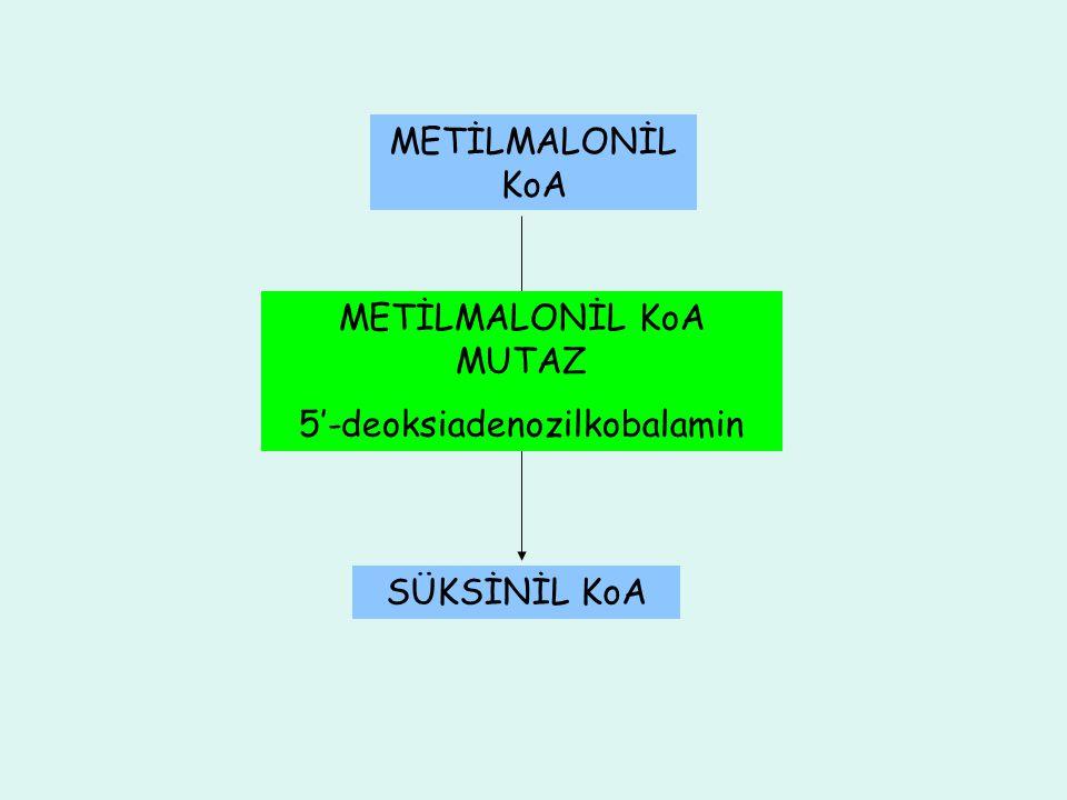 METİLMALONİL KoA MUTAZ 5'-deoksiadenozilkobalamin