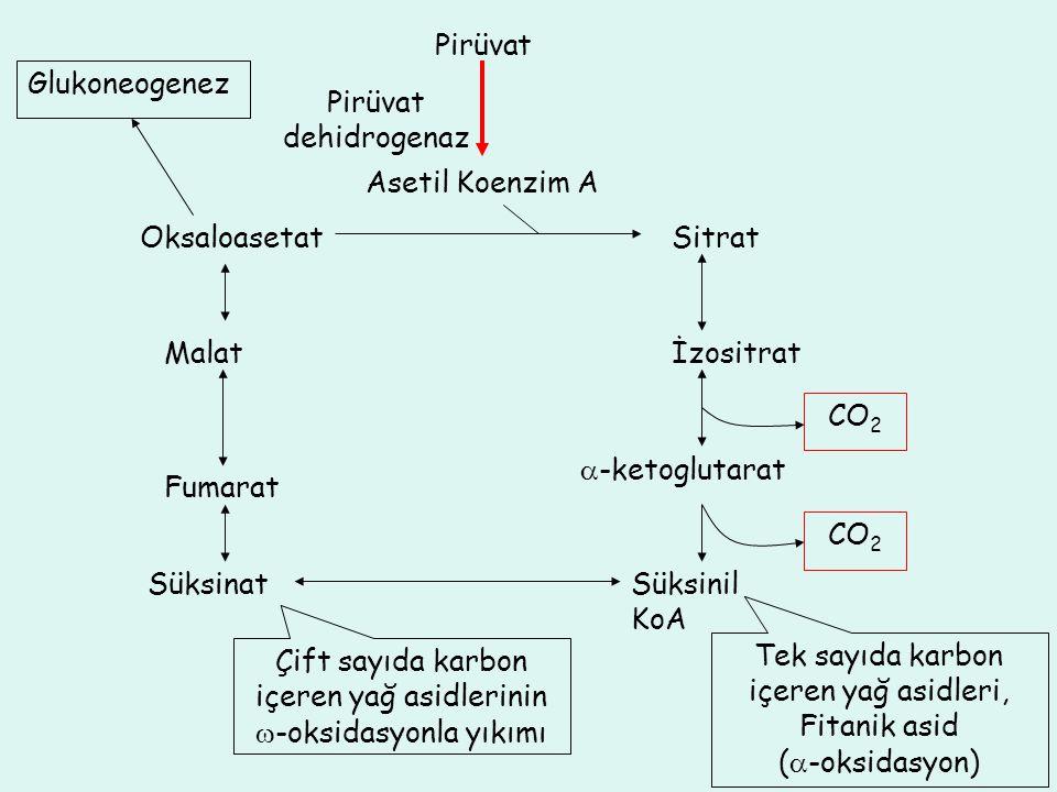 Çift sayıda karbon içeren yağ asidlerinin -oksidasyonla yıkımı