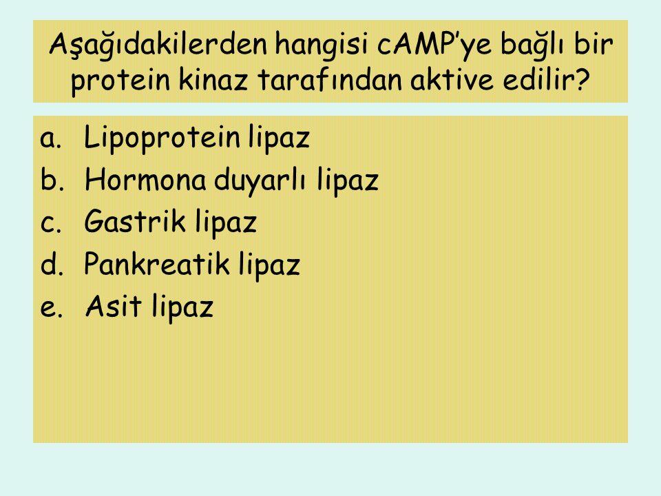Aşağıdakilerden hangisi cAMP'ye bağlı bir protein kinaz tarafından aktive edilir
