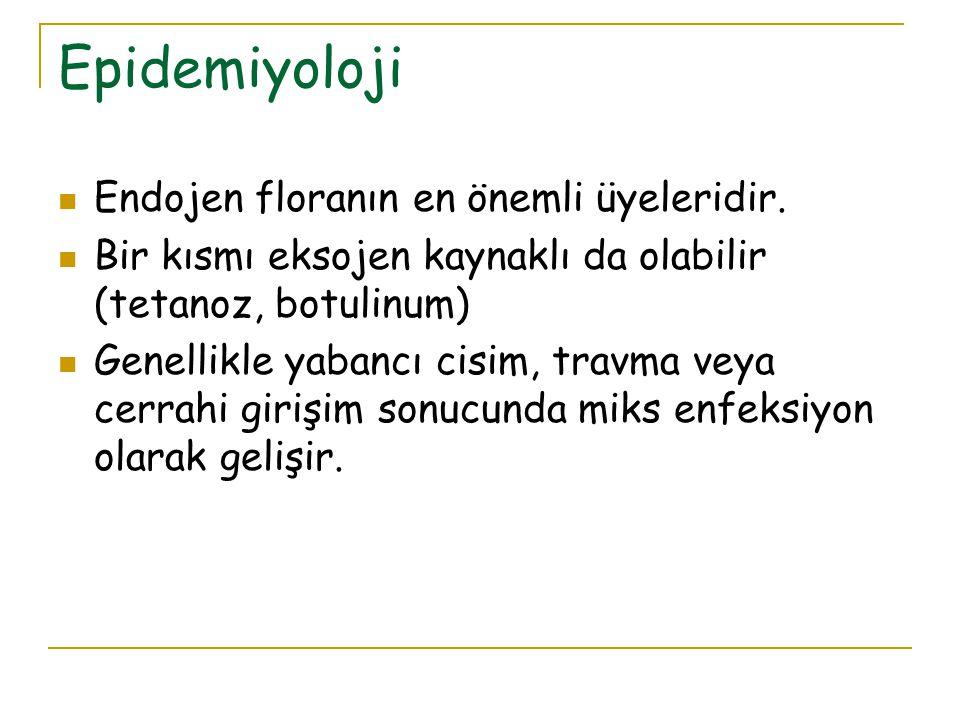 Epidemiyoloji Endojen floranın en önemli üyeleridir.