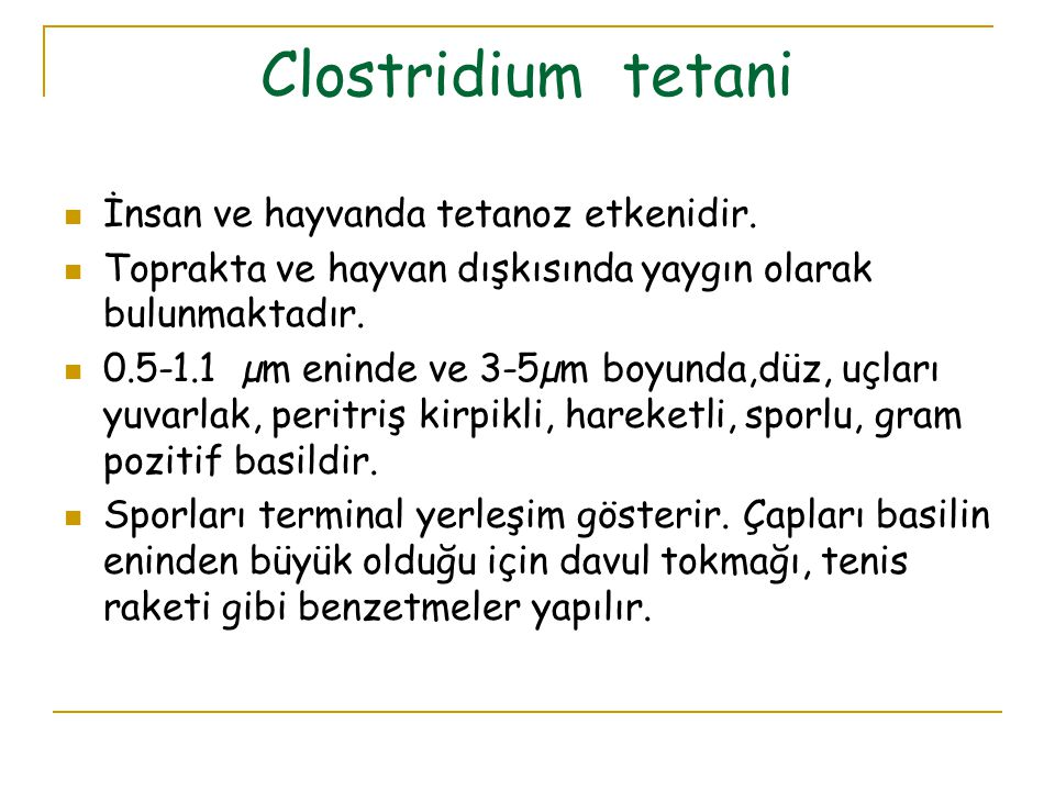 Clostridium tetani İnsan ve hayvanda tetanoz etkenidir.