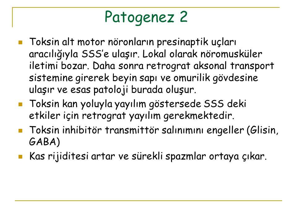 Patogenez 2