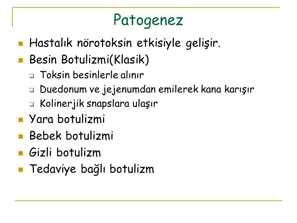 Patogenez Hastalık nörotoksin etkisiyle gelişir.