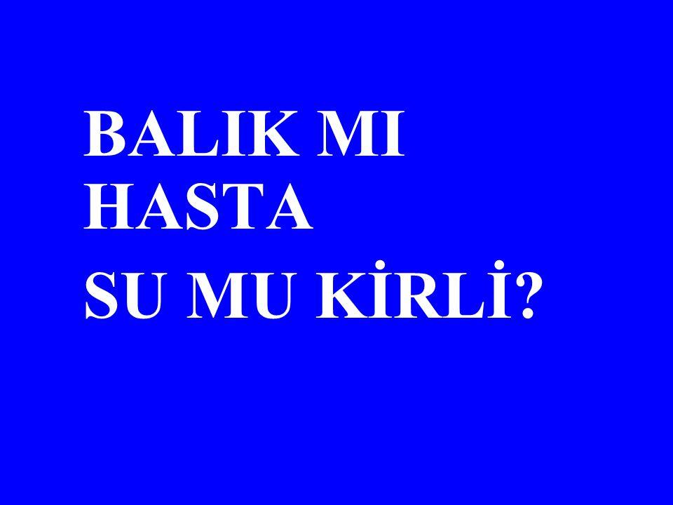 BALIK MI HASTA SU MU KİRLİ