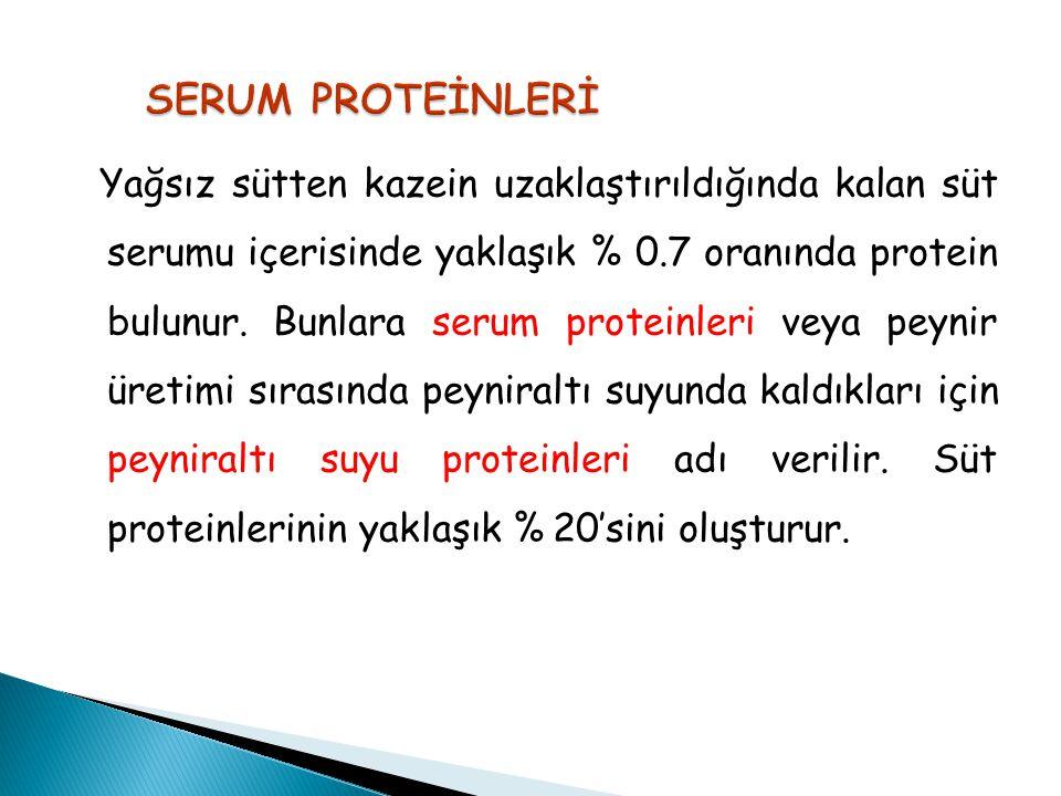 SERUM PROTEİNLERİ