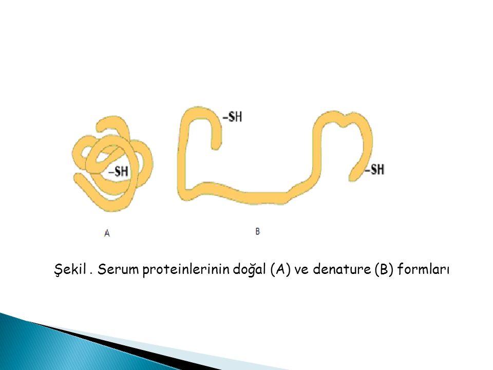 Şekil . Serum proteinlerinin doğal (A) ve denature (B) formları