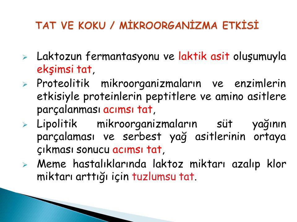 TAT VE KOKU / MİKROORGANİZMA ETKİSİ