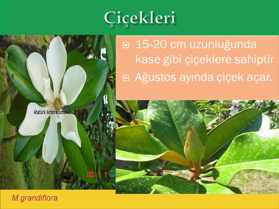Çiçekleri 15-20 cm uzunluğunda kase gibi çiçeklere sahiptir