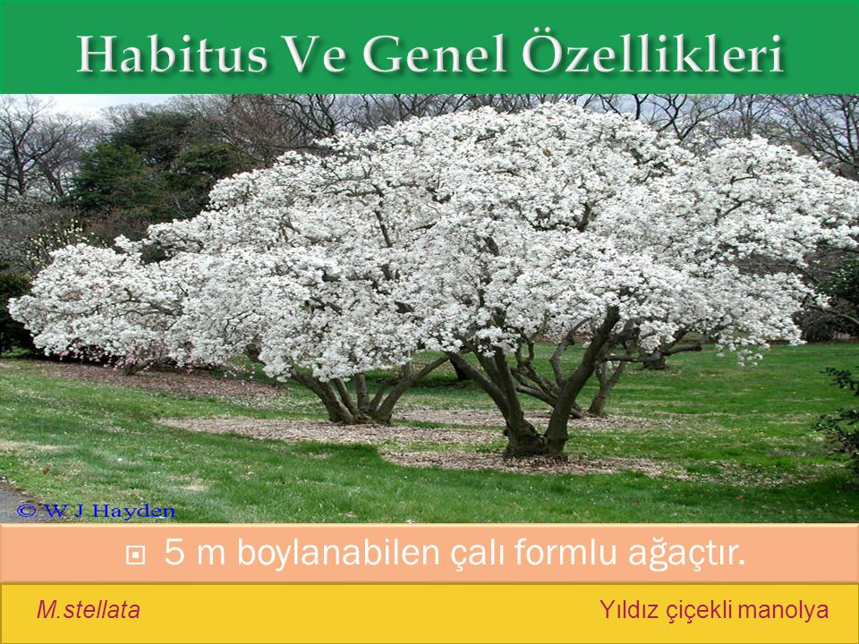 Habitus Ve Genel Özellikleri