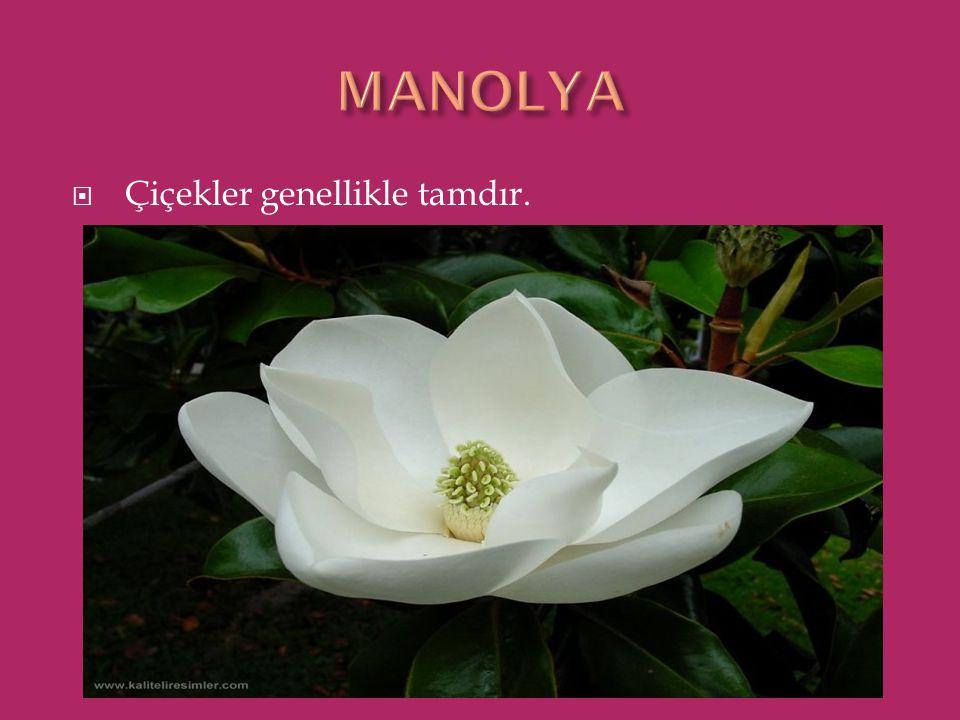MANOLYA Çiçekler genellikle tamdır.