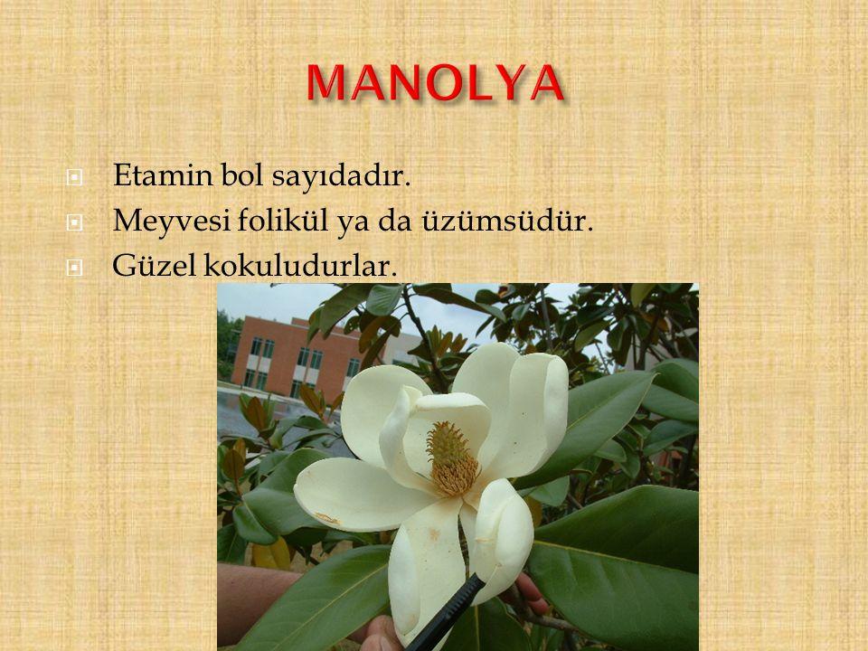 MANOLYA Etamin bol sayıdadır. Meyvesi folikül ya da üzümsüdür.
