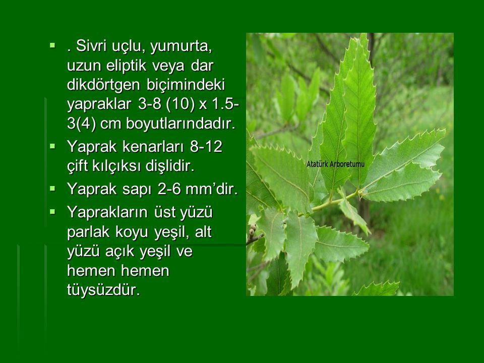 . Sivri uçlu, yumurta, uzun eliptik veya dar dikdörtgen biçimindeki yapraklar 3-8 (10) x 1.5-3(4) cm boyutlarındadır.