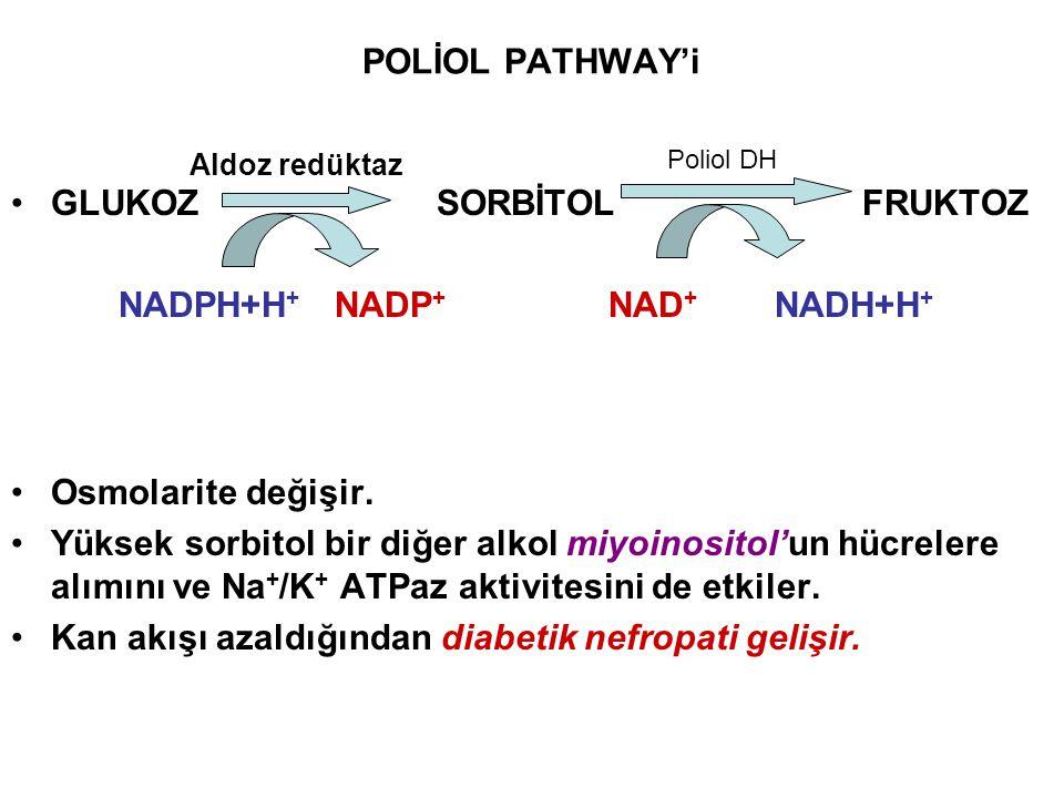 GLUKOZ SORBİTOL FRUKTOZ NADPH+H+ NADP+ NAD+ NADH+H+