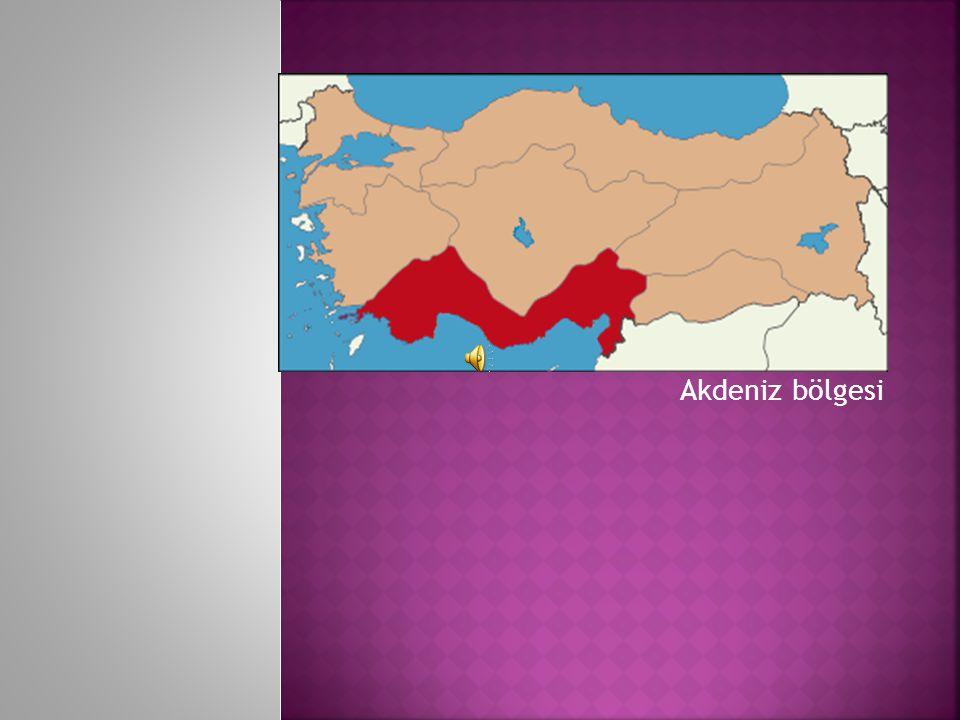 Akdeniz bölgesi Akdeniz bölgesi