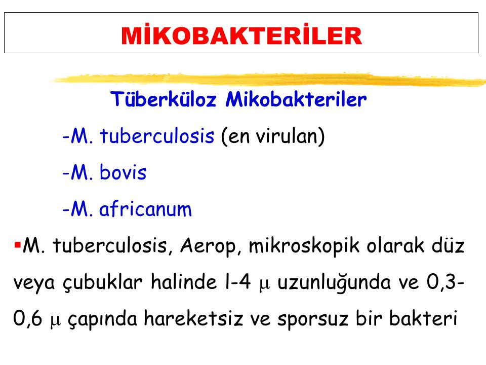 MİKOBAKTERİLER Tüberküloz Mikobakteriler -M. tuberculosis (en virulan)