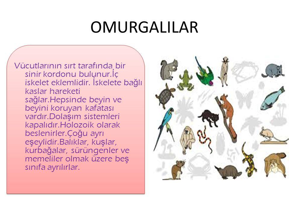 OMURGALILAR