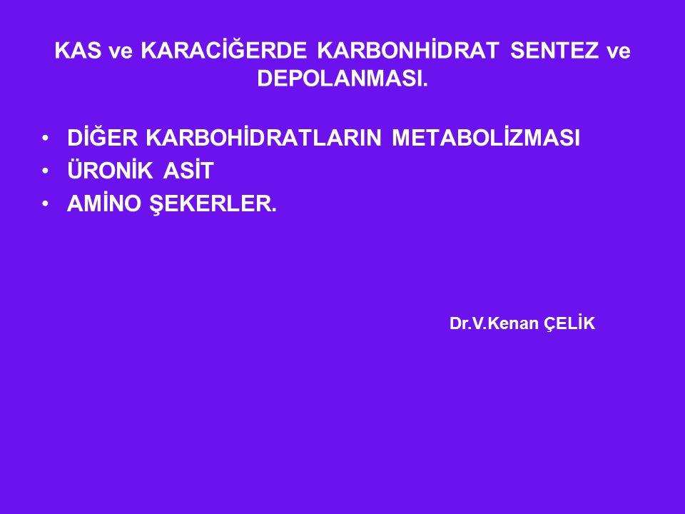 KAS ve KARACİĞERDE KARBONHİDRAT SENTEZ ve DEPOLANMASI.