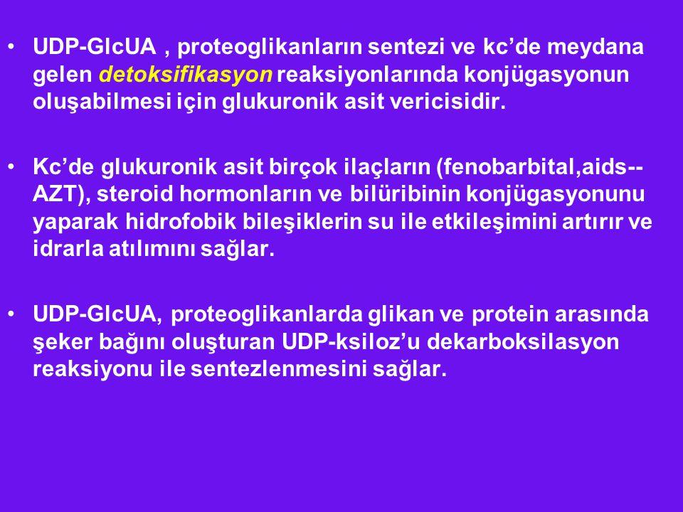 UDP-GlcUA , proteoglikanların sentezi ve kc'de meydana gelen detoksifikasyon reaksiyonlarında konjügasyonun oluşabilmesi için glukuronik asit vericisidir.
