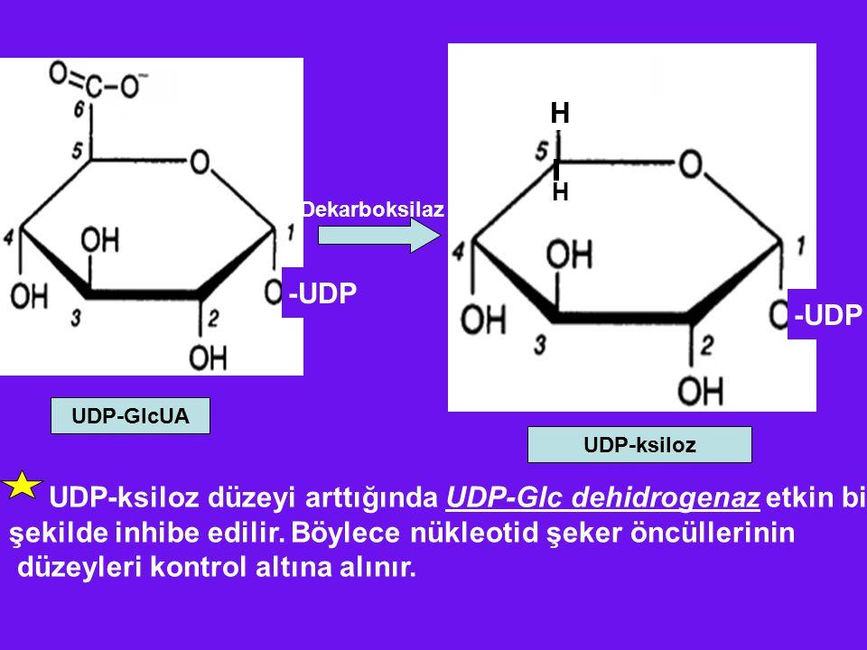 UDP-ksiloz düzeyi arttığında UDP-Glc dehidrogenaz etkin bir