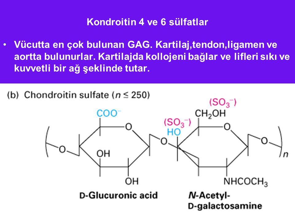 Kondroitin 4 ve 6 sülfatlar