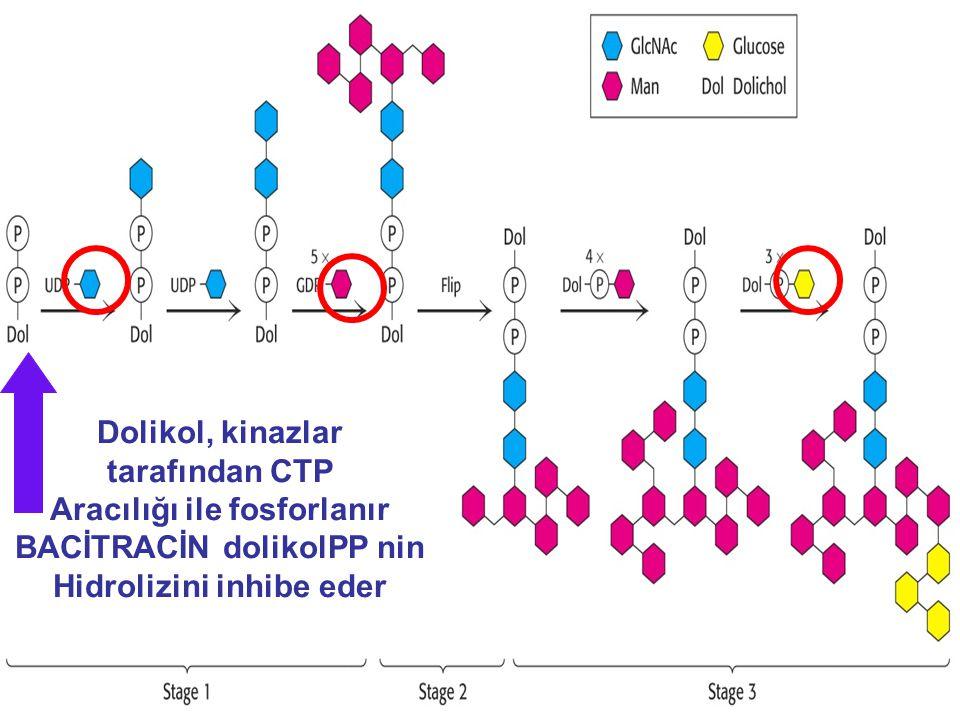 Aracılığı ile fosforlanır BACİTRACİN dolikolPP nin