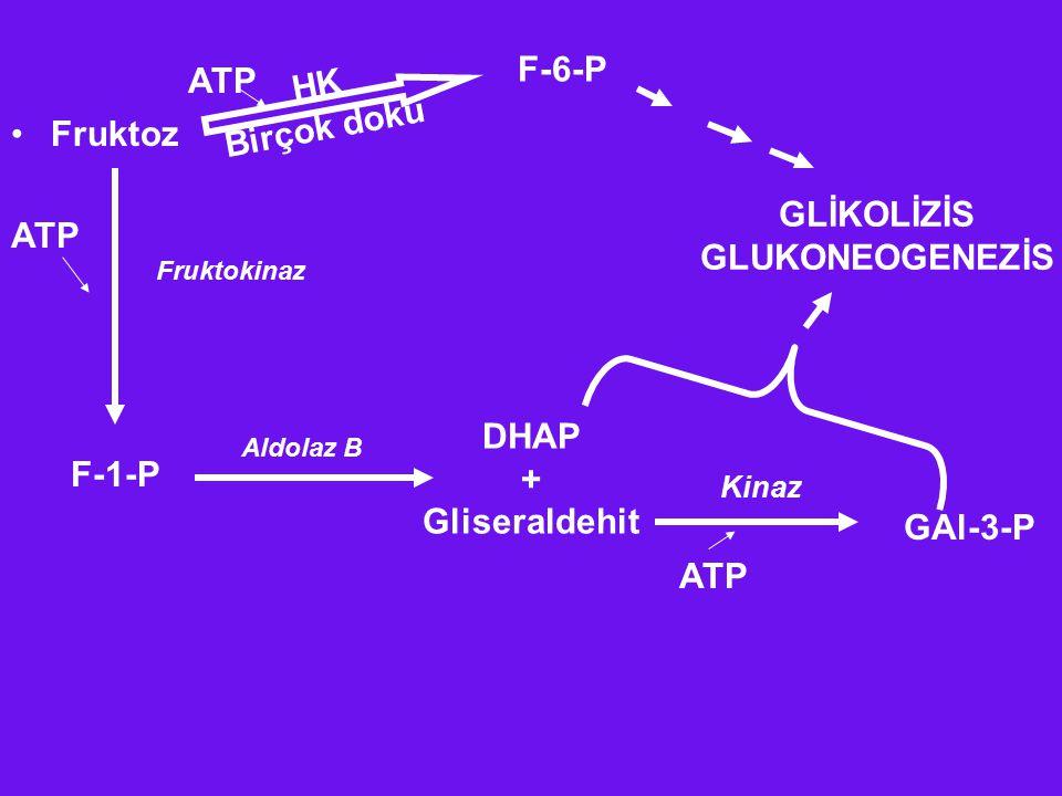 F-6-P ATP HK Birçok doku Fruktoz GLİKOLİZİS GLUKONEOGENEZİS ATP DHAP +
