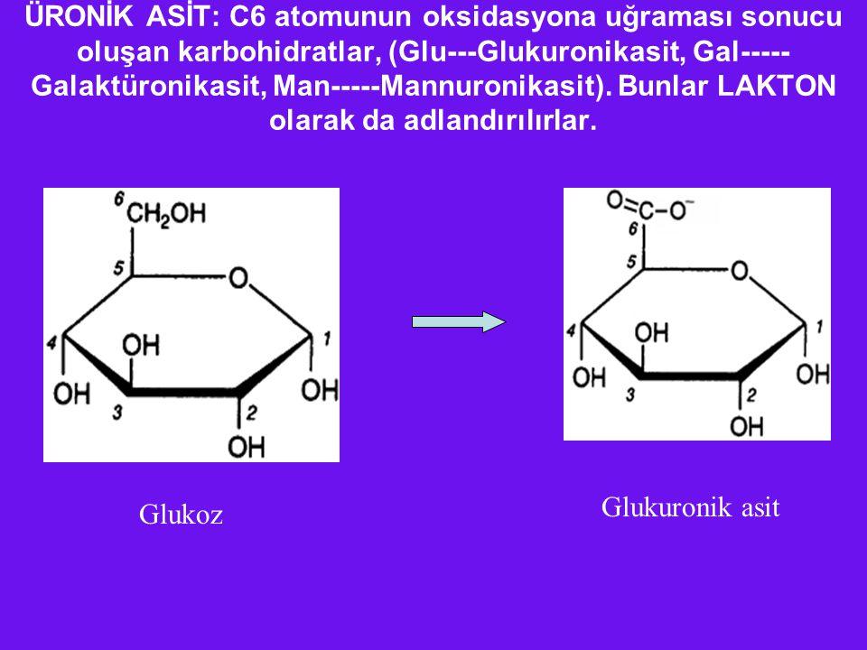 ÜRONİK ASİT: C6 atomunun oksidasyona uğraması sonucu oluşan karbohidratlar, (Glu---Glukuronikasit, Gal-----Galaktüronikasit, Man-----Mannuronikasit). Bunlar LAKTON olarak da adlandırılırlar.