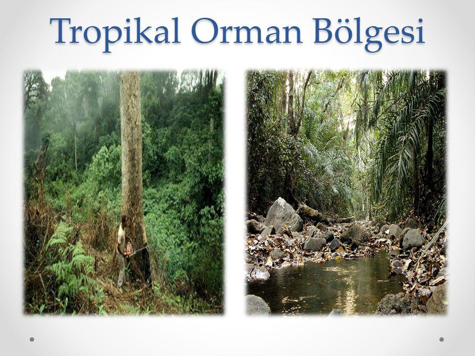 Tropikal Orman Bölgesi