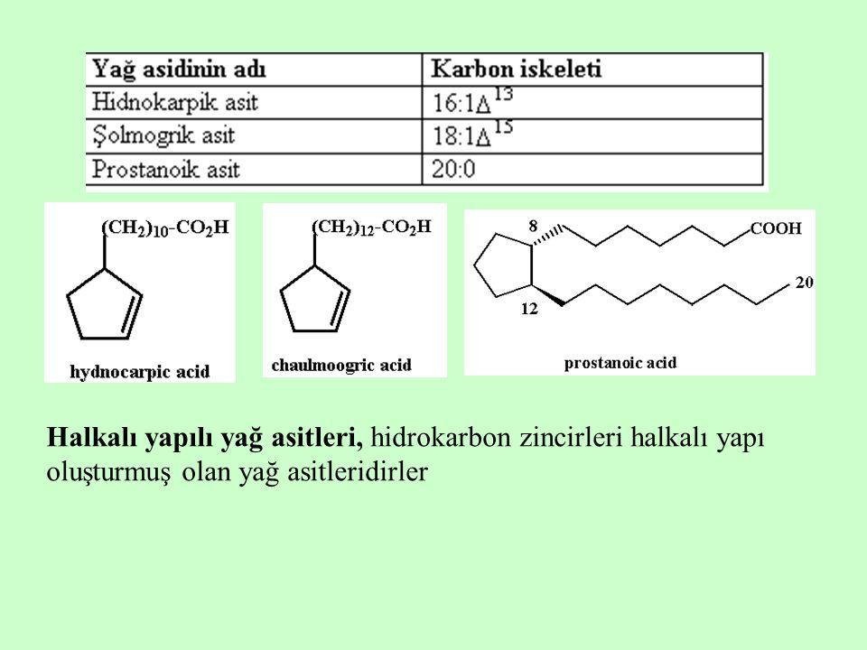 Halkalı yapılı yağ asitleri, hidrokarbon zincirleri halkalı yapı oluşturmuş olan yağ asitleridirler