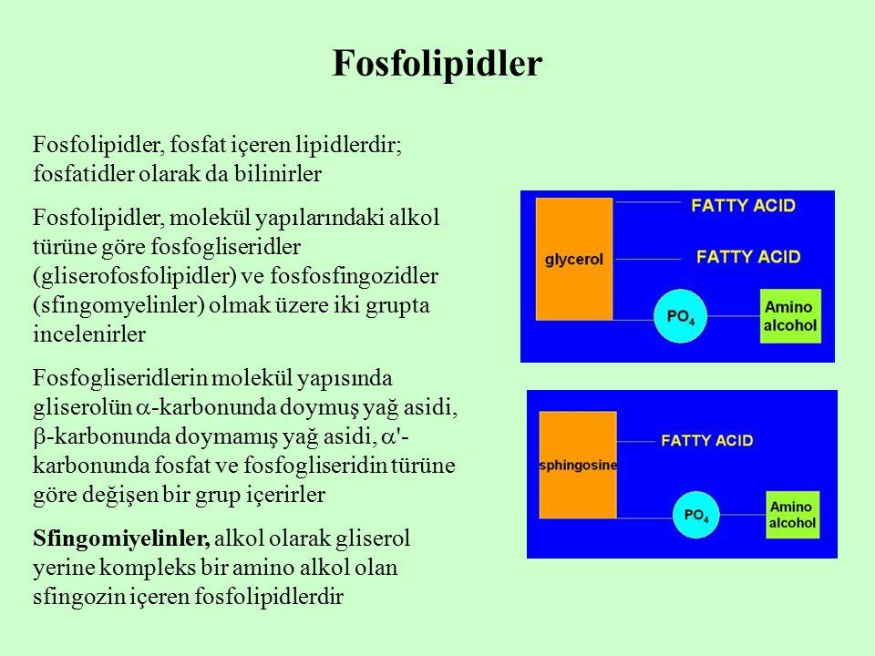 Fosfolipidler Fosfolipidler, fosfat içeren lipidlerdir; fosfatidler olarak da bilinirler.
