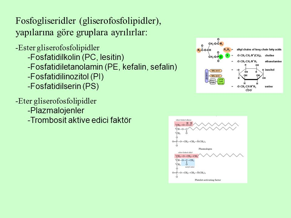 Fosfogliseridler (gliserofosfolipidler), yapılarına göre gruplara ayrılırlar: