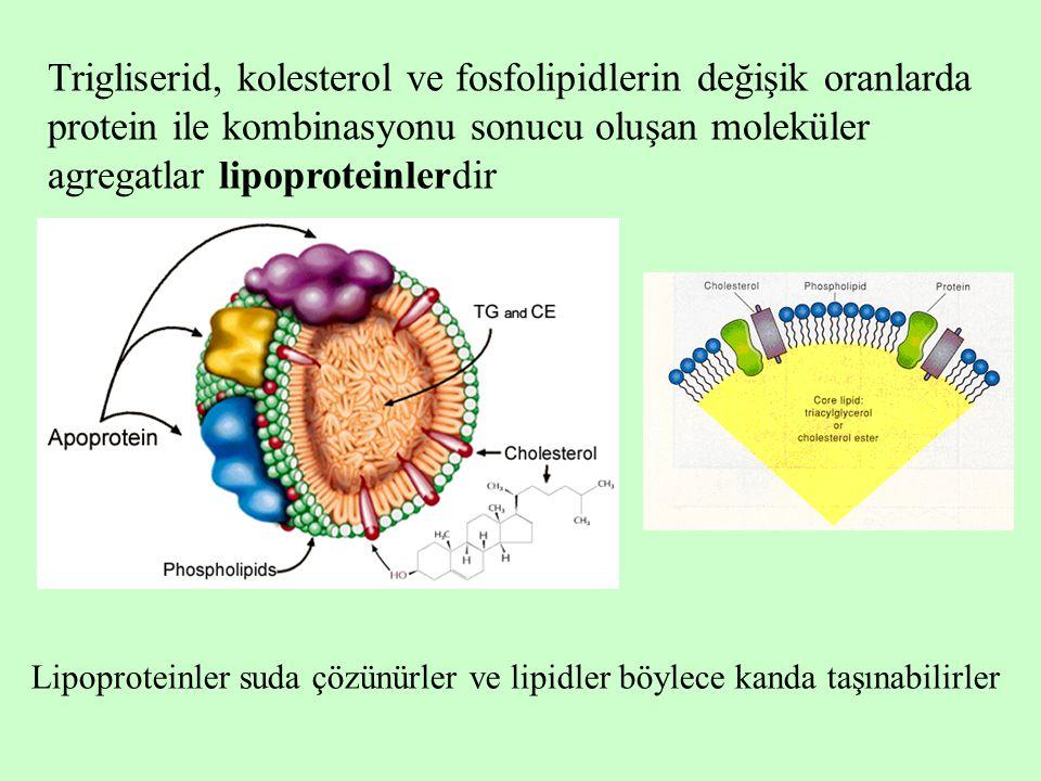 Trigliserid, kolesterol ve fosfolipidlerin değişik oranlarda protein ile kombinasyonu sonucu oluşan moleküler agregatlar lipoproteinlerdir