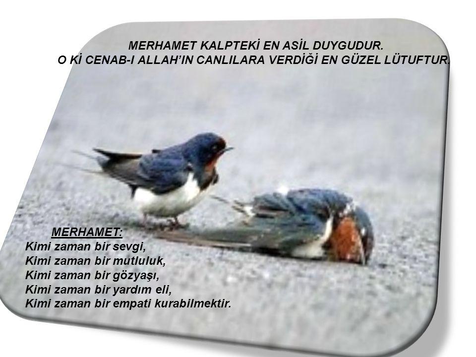 MERHAMET KALPTEKİ EN ASİL DUYGUDUR.