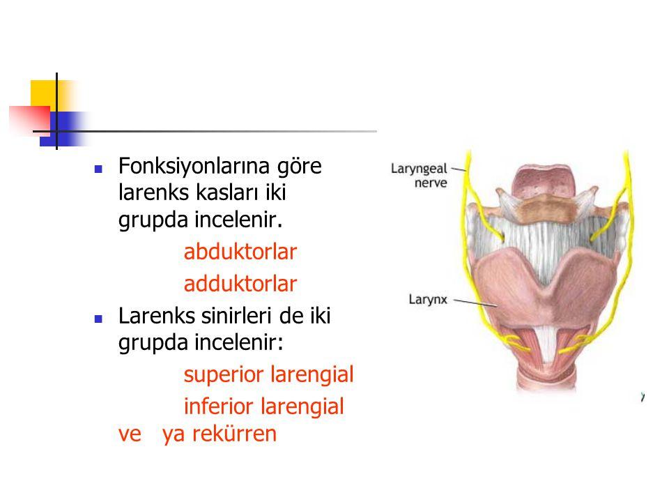 Fonksiyonlarına göre larenks kasları iki grupda incelenir.