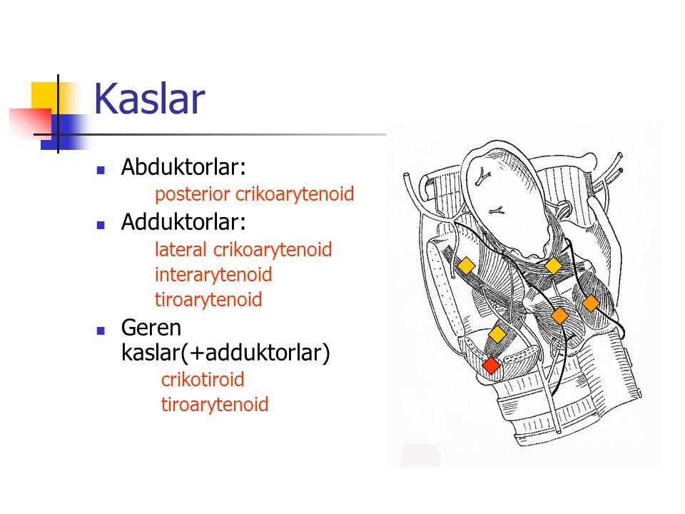 Kaslar Abduktorlar: Adduktorlar: Geren kaslar(+adduktorlar)