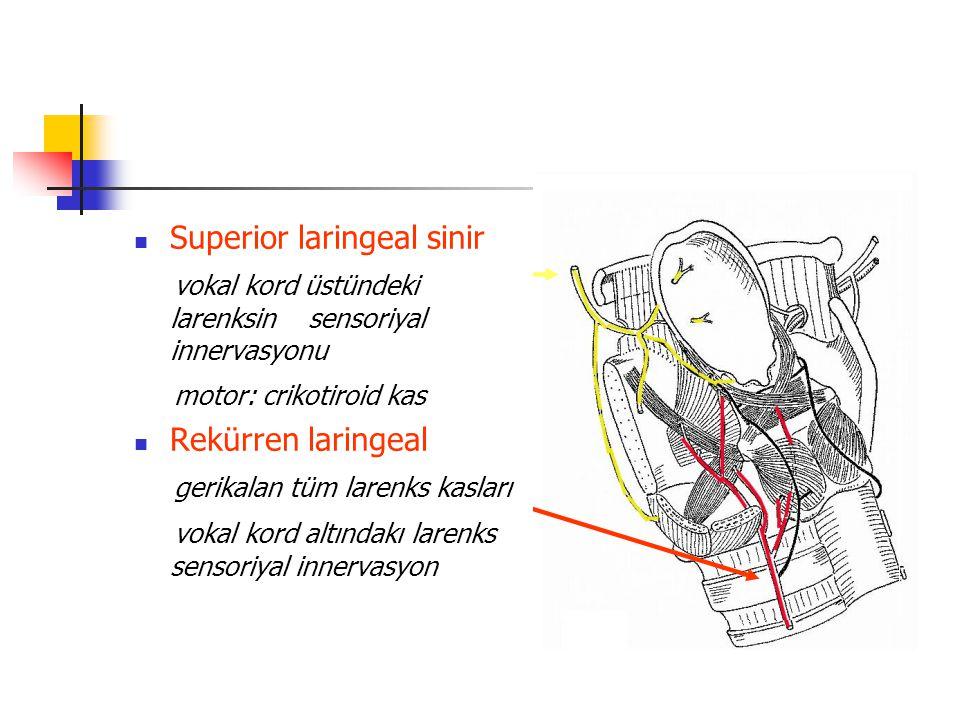 Superior laringeal sinir