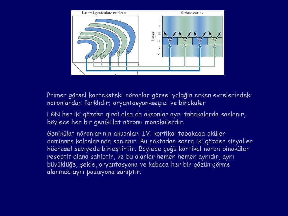 Primer görsel korteksteki nöronlar görsel yolağın erken evrelerindeki nöronlardan farklıdır; oryantasyon-seçici ve binoküler