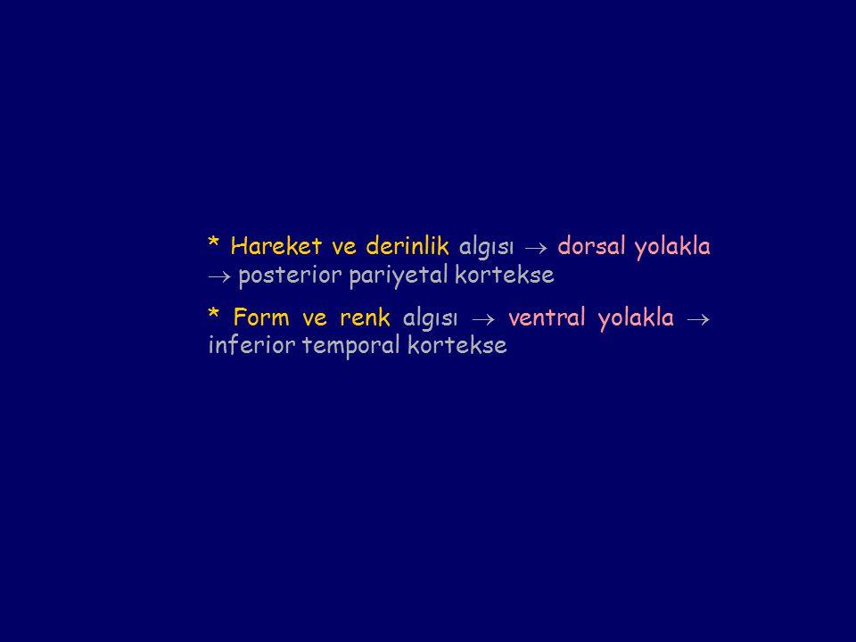 * Hareket ve derinlik algısı  dorsal yolakla  posterior pariyetal kortekse